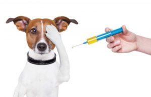 חיסונים נגד כלבת
