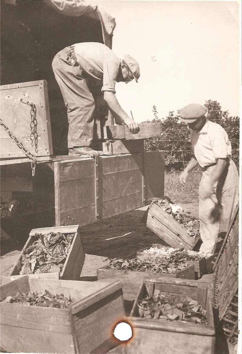 גידול ירקות בכפר - הטענת התוצרת על המשאית של הקואופרטיב