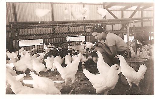 חקלאות הביצים - גידול פרגיות