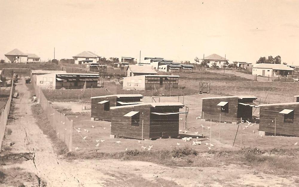שנים ראשונות של הכפר, שכונת _גידול עופות_ בה גודלו האפרוחים